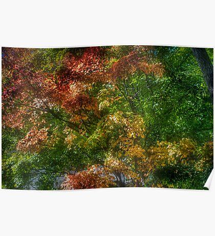Fall Foliage.. Poster