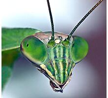 Mantis (7) Photographic Print