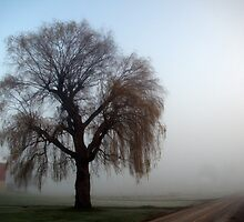 Willow weeping in the fog. by Billlee