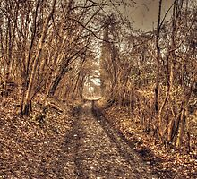 The Old Trackway by Dave Godden