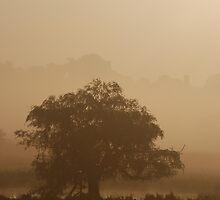 The Dambusters tree by Jason Clarke
