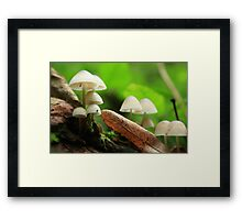 Small world Framed Print
