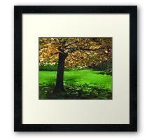 MY LOVE OF TREES I Framed Print