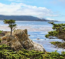 Lone Cypress by Judy Vincent