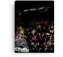 Berries On Brick - For BW Challenge 'B' Canvas Print