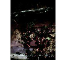 Berries On Brick - For BW Challenge 'B' Photographic Print