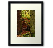 Trunks and Steps... A way through the woods. Framed Print