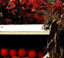 Pumpkin Cart by Barbara Gerstner