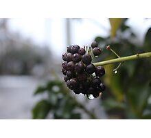 Wet Plant Photographic Print