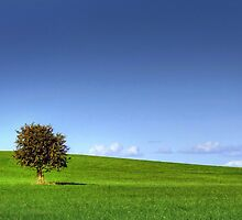 green , blue and lone tree  by Jon Baxter