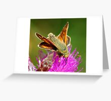 Feeding butterfly Greeting Card
