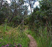 A Little Path by Evita