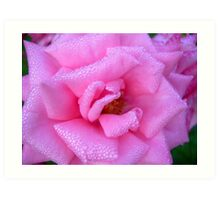 Morning Dew on a Rose..... Art Print