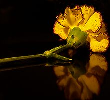 Carnation ..... Love by GayeLaunder Photography