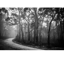 Misty Trees in Black and White Photographic Print