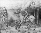 Sir Cuspid's fatal mistake by Nestor