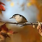 White Breasted Nuthatch ignores dead leaf by Normcar
