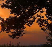 Cherry Tree at dusk by Cassy Greenawalt