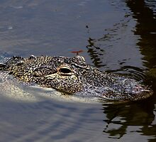 Dragon And Gator by Debbie Oppermann