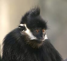 Francois' Langur by Lisa G. Putman
