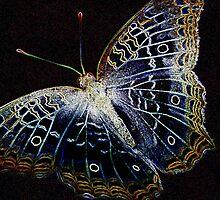 Electric Butterfly II by Donna Adamski