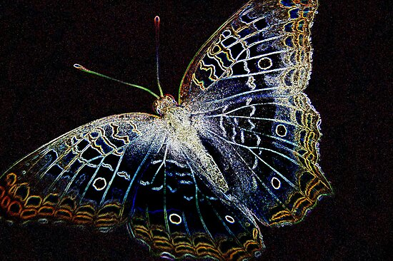 Electric Butterfly II by Donna Adamski