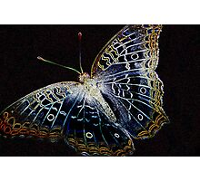Electric Butterfly II Photographic Print