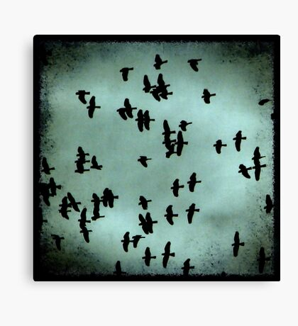 Black Birds Canvas Print