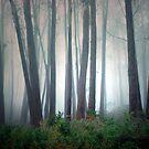 Mount Buffalo Forest. by Ern Mainka