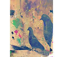 Pigeon Silhoutte 2 Photographic Print