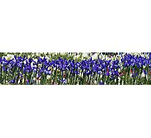 Iris Sing Along Photographic Print