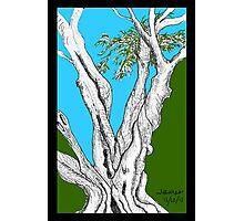 banrai's Olive Tree Photographic Print