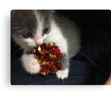 Curiosity Didn't Kill The Cat  Canvas Print