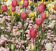 Pastel Tulips by Sharon Robertson