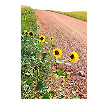 Sunflower country roads Photographic Print