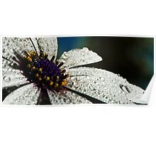 Wet White Flower Poster