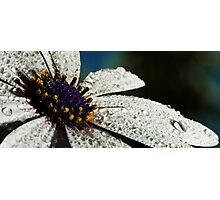 Wet White Flower Photographic Print