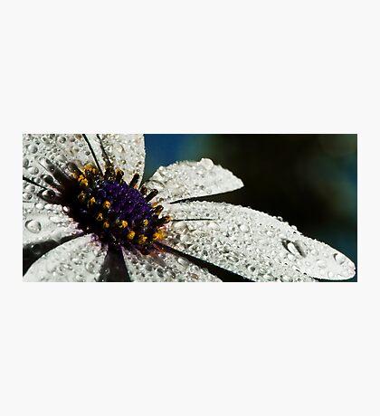 Wet White Flower Photographic Print