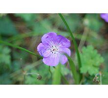 Le Fleur Photographic Print