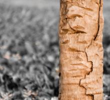 Kingfisher on a stump Sticker