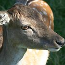 Young Doe by mousesuzy