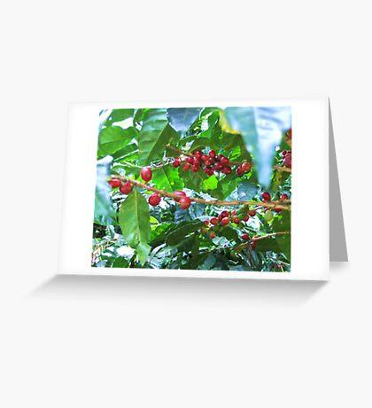 El Salvador #4 - Ripe coffee fruit beans Greeting Card