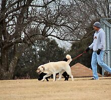Walking the Labs before the Blizzard by MoreKeala