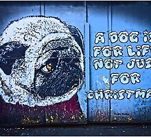 A dog is for life, not just Christmas by Tim Constable