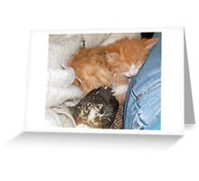 Nap Time for Diverse Food Chain Items Greeting Card