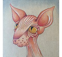 Right Side Up Sphynx Photographic Print