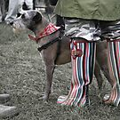 Its a Dog's life in the fashion world! by George Ledger