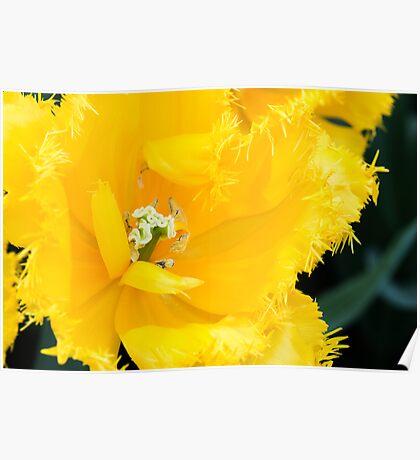 """Gefranjerde Tulipa """"Mon Amour"""" Poster"""