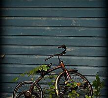 Centennial Grove by Kaitlyn  Squires