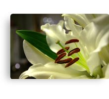 Lily Flower Canvas Print